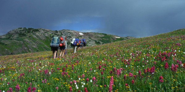 BackpackingWildflowers
