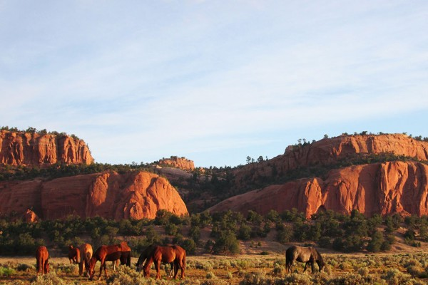 Horses in Desert 1000x750