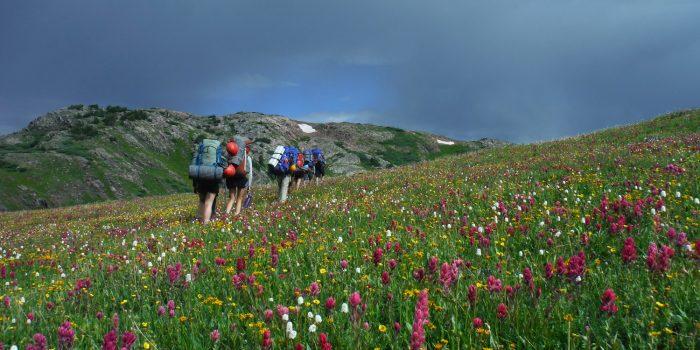 BackpackingWildflowers