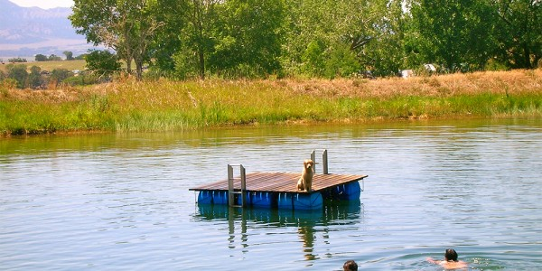 pond life 1000x750